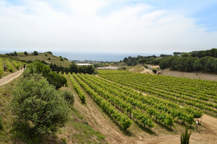 Sailing to coastal vineyards wine tasting2 (1)